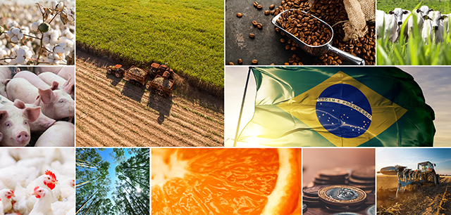 collage of Brazilian food & agriculture