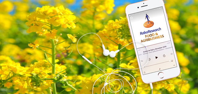 canola field and podcast