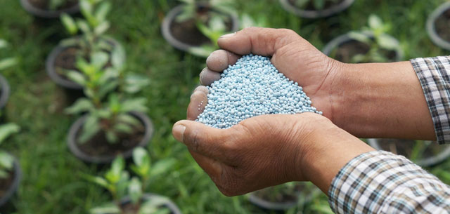 picture of hands holding phosphate fertiliser