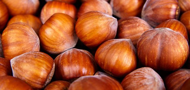 picture of hazelnuts