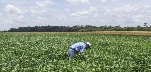 photo of farmer in Brazilian soybean field