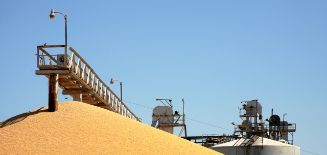 photo of grains harvest