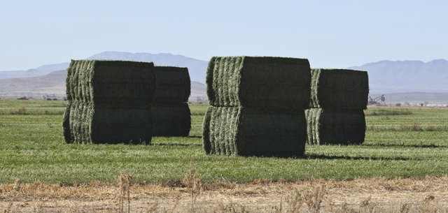 photo of alfalfa hay bales