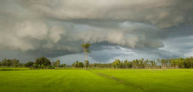 picture of storm over rice paddy