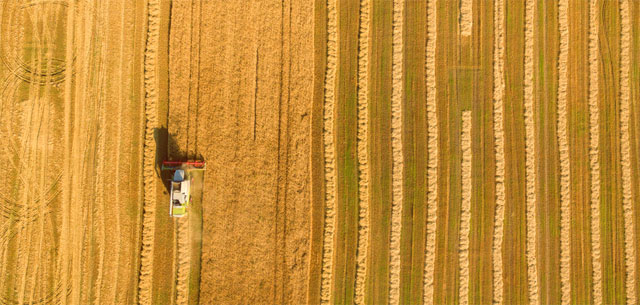aerial picture of wheat harvest