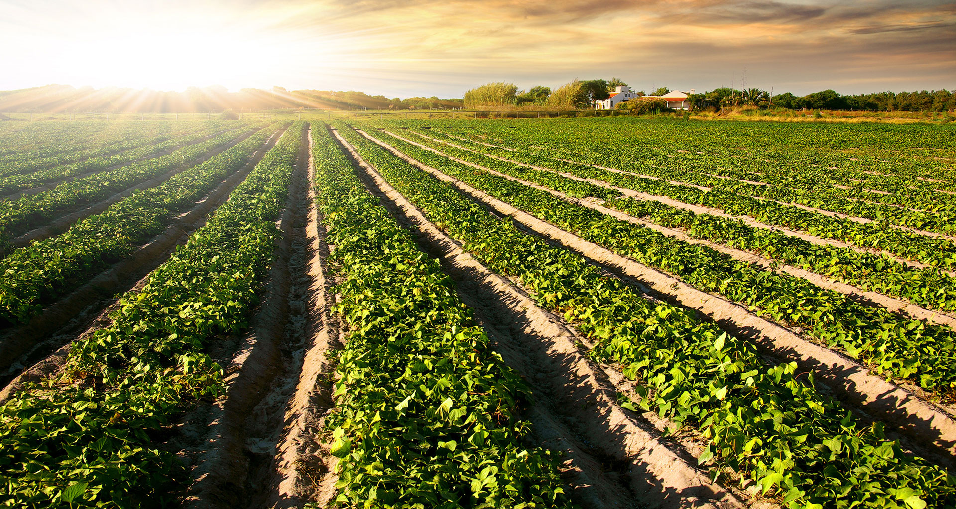 The European Feed Mix: Successful Ingredients for the ...