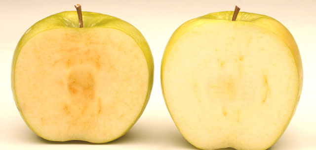 picture of arctic apple compared to regular apple