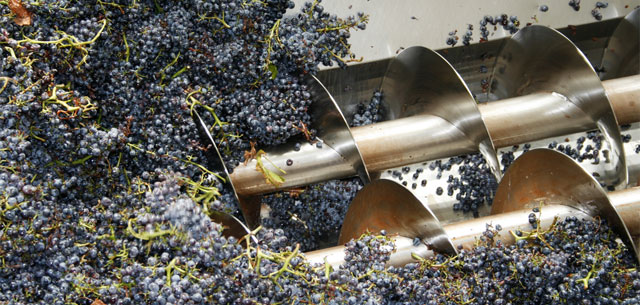 photo of wine processing