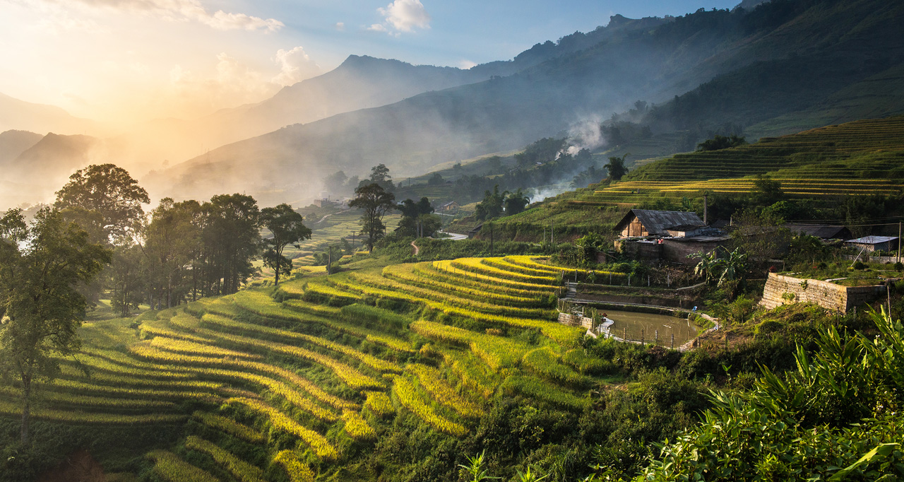 picture of Vietnamese ricefields