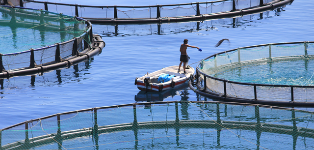 Picture of fish farm
