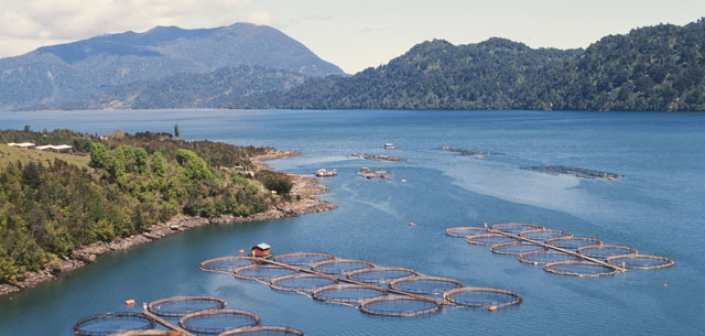picture of salmon farm in chile