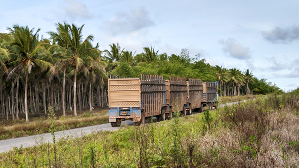 photo of sugarcane transport in Brazil