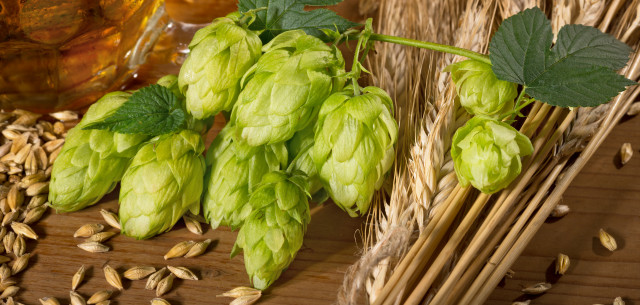 picture of beer, hop and malt