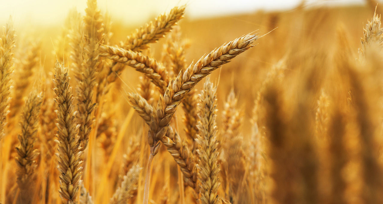 american food and grains commodity and Cargill is an international producer and marketer of food, agricultural, financial and industrial products and services.
